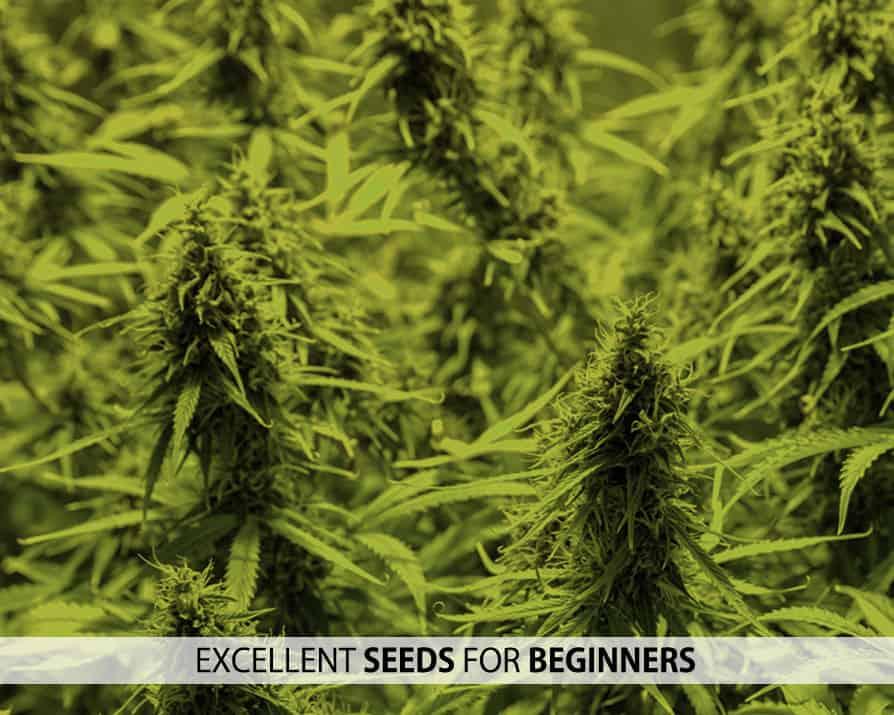 Beginners Seeds